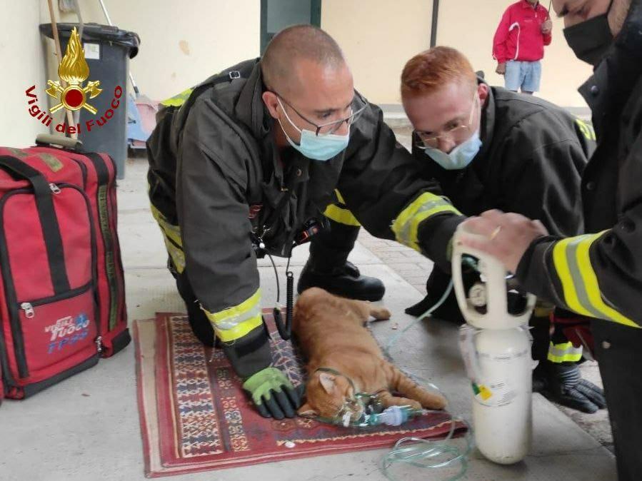 Vigili del Fuoco impegnati nel salvataggio di animali